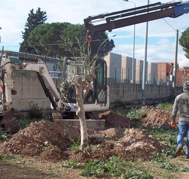 Siracusa, alberi espiantati e ripiantumati per far spazio ad un rifornimento