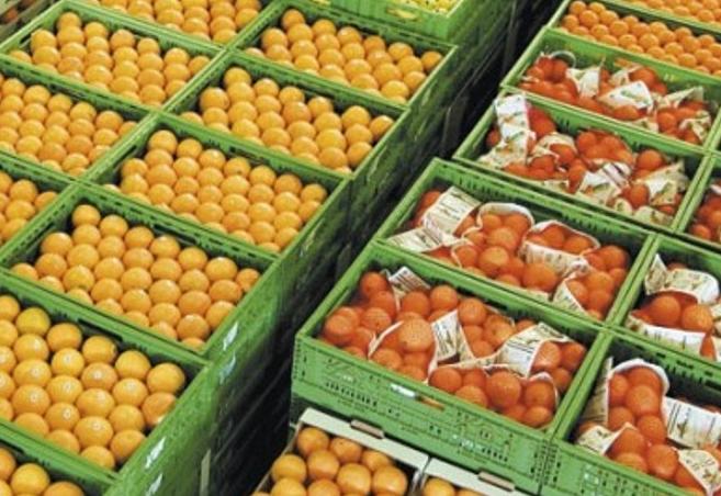 """Palermo, la """"frutta dei boss"""": sequestrate 3 aziende di ortofrutta"""