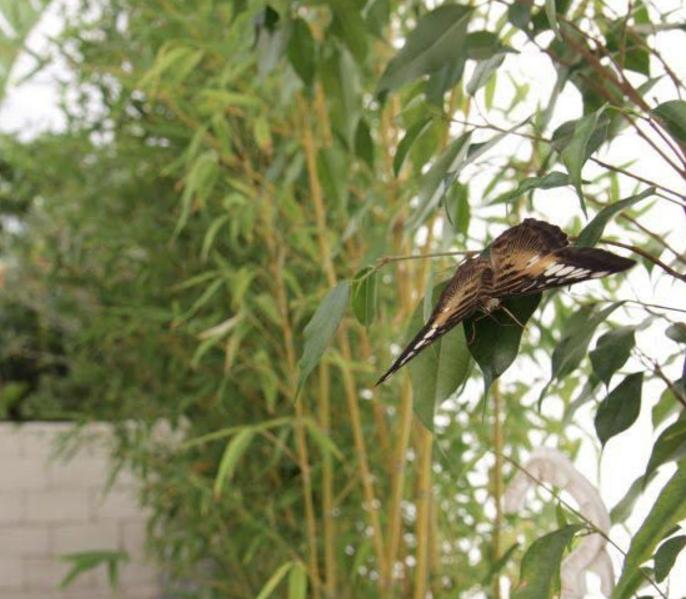 """Modica, torna la """"Casa delle Farfalle"""": un bucolico rifiugio dalla quotidianità"""
