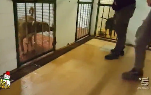 Striscia La Notizia al canile di Palermo: cani legati e gabbie troppo piccole