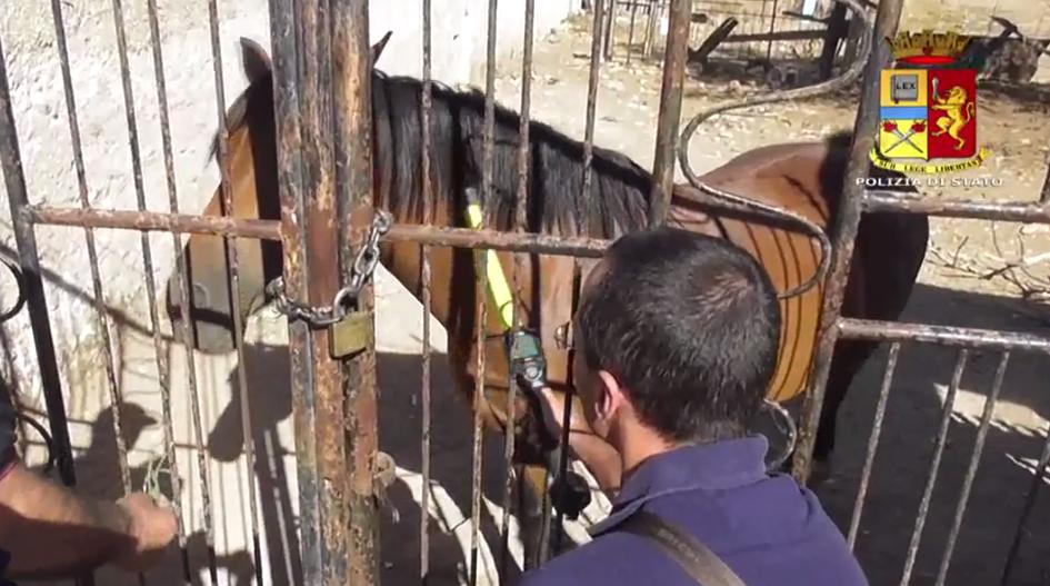 Corse di cavalli clandestine, 5 indagati nel Siracusano: sostanze dopanti in una scuderia di Floridia
