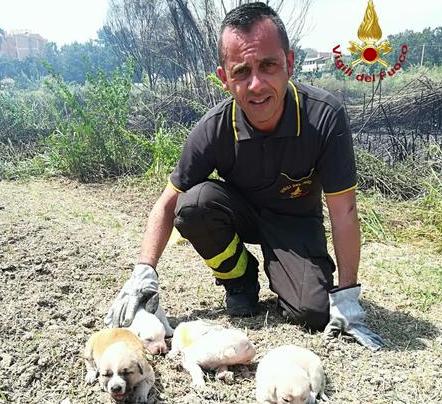 Isola Capo Rizzuto, cagnolini salvati da rogo di sterpaglie