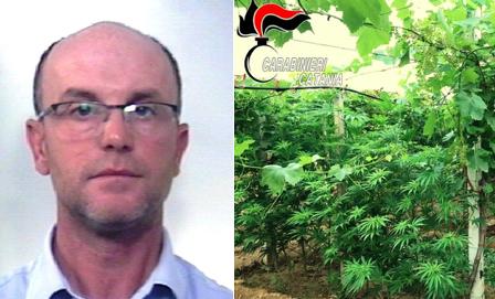 Coltivava 'fumo' nel vigneto: arrestato a Mazzarrone