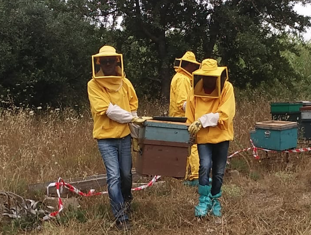 Distrutti 91 alveari a Lentini perchè infestati da coleottero