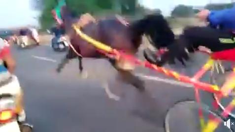 Corsa clandestina di cavalli a Siracusa postata su fb: parte denuncia -VIDEO
