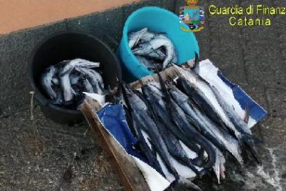 Catania, sequestrati 43 esemplari di pesce spada novello dalla Finanza