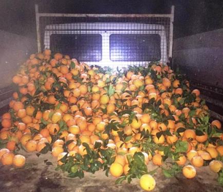 Ramacca, sventato un furto di una tonnellate di arance