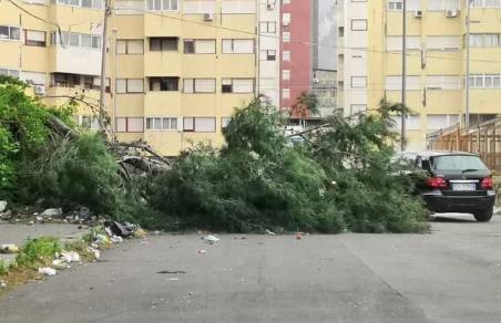 Maltempo, decine di alberi caduti per il vento  a Palermo e allagamenti