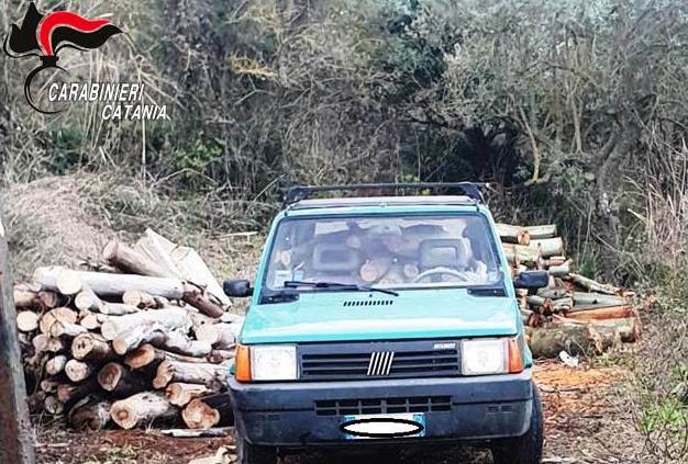 San Michele di Ganzaria, rubano 1300 chili di legna: due denunciati