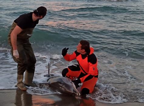 Catania, delfino non riesce a prendere il mare: muore nella battigia della Plaja