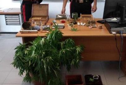 Coltivavano piante di canapa indiana: 4 arresti nel Cosentino