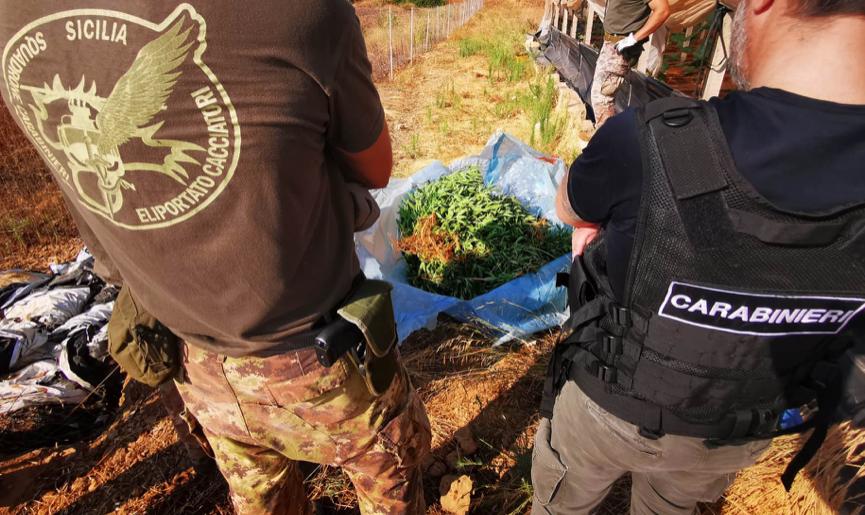 Nella serra delle zucchine anche 523 piante di cannabis: un arresto a Gela