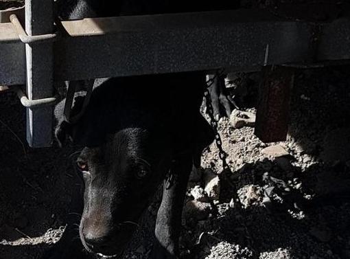 Discarica abusiva di mezzi e cani maltenuti: coppia denunciata a Catania