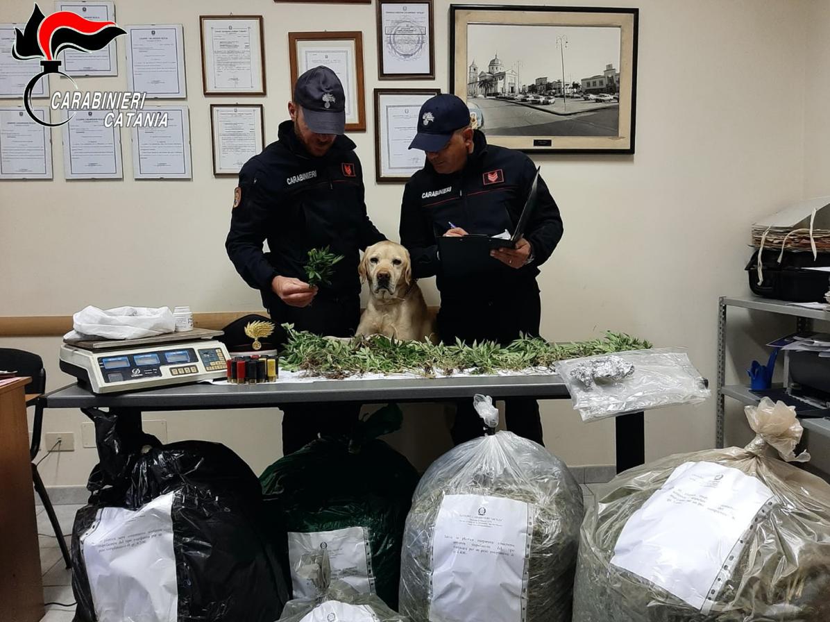 Nello scantinato gli trovano 25 chili di marijuana, arrestato a Mascali