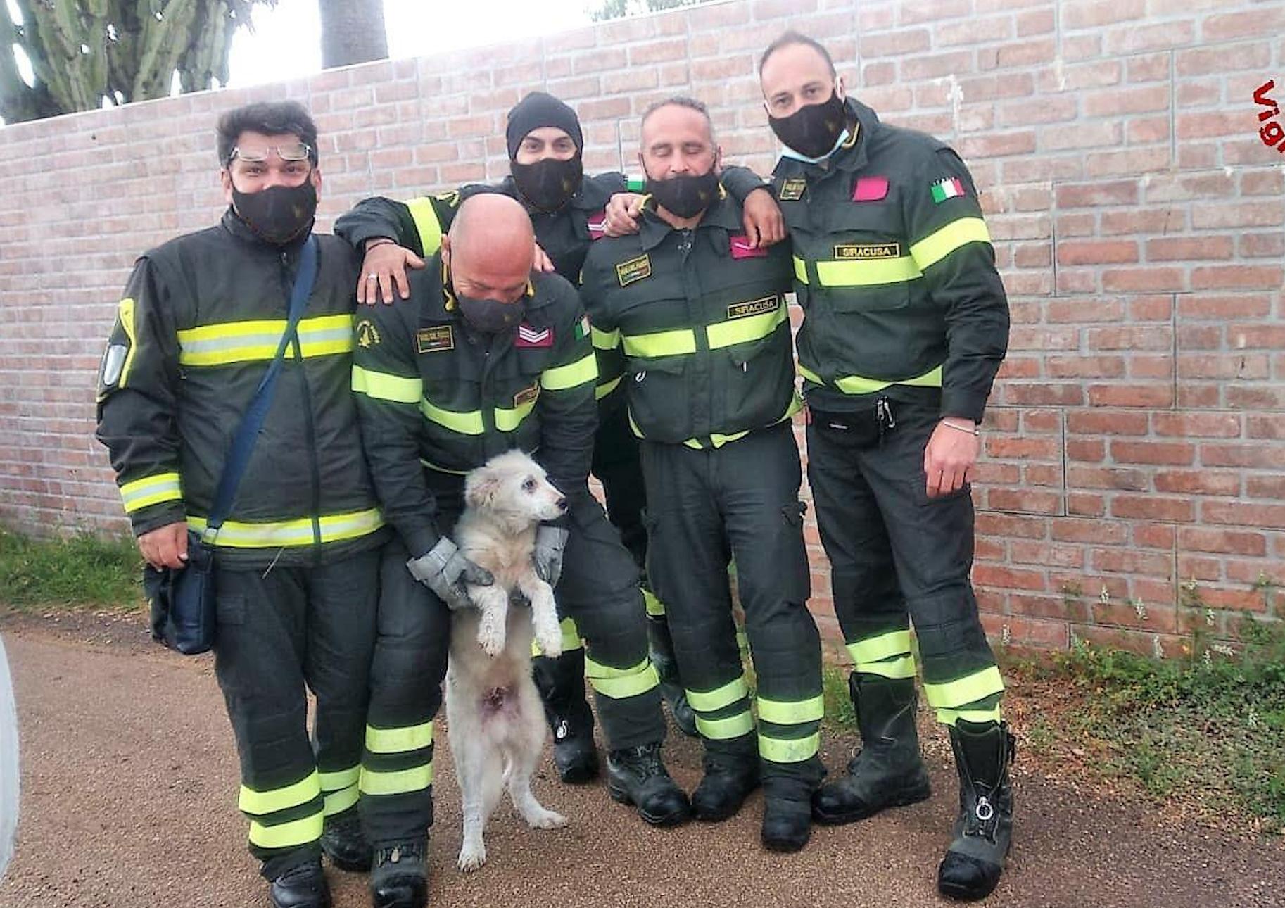 Siracusa, cagnolino liberato da un cespuglio a Ognina