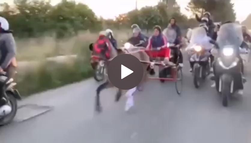 Corsa clandestina di cavalli a Noto, denunciato un fantino di 17 anni VIDEO