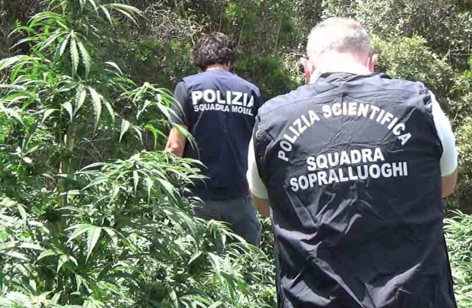 Scicli, maxi sequestro di cannabis: piantagione con 93 chili di droga