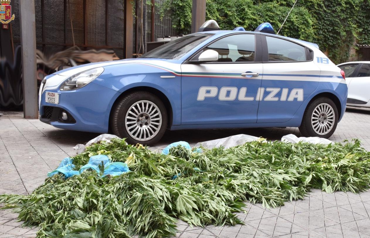 Scoperte 200 piante di marijuana a Santa Venerina: un arresto ad Acireale