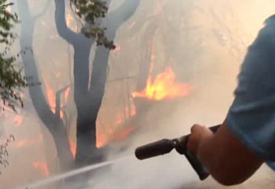 Incendi in Sicilia, Mancuso (Fi): non lasciamo i sindaci da soli