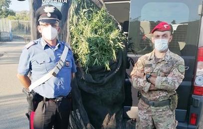 Scoperte 300 piante di cannabis, due arresti a Fiumefreddo di Sicilia