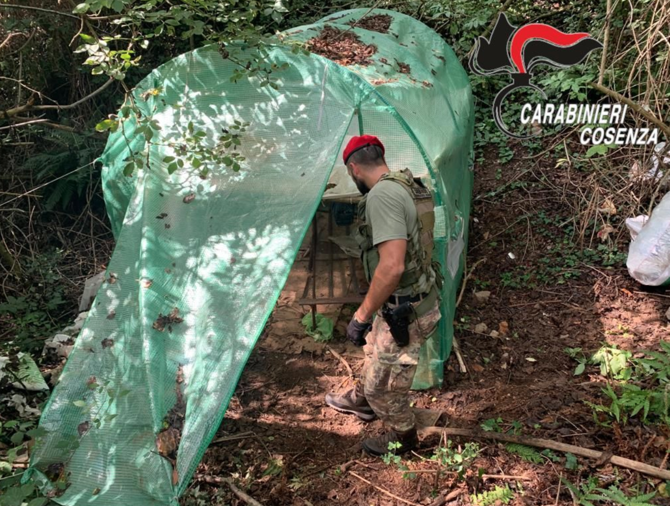 Scoperta coltivazione di canapa, 5 arresti a Cetraro