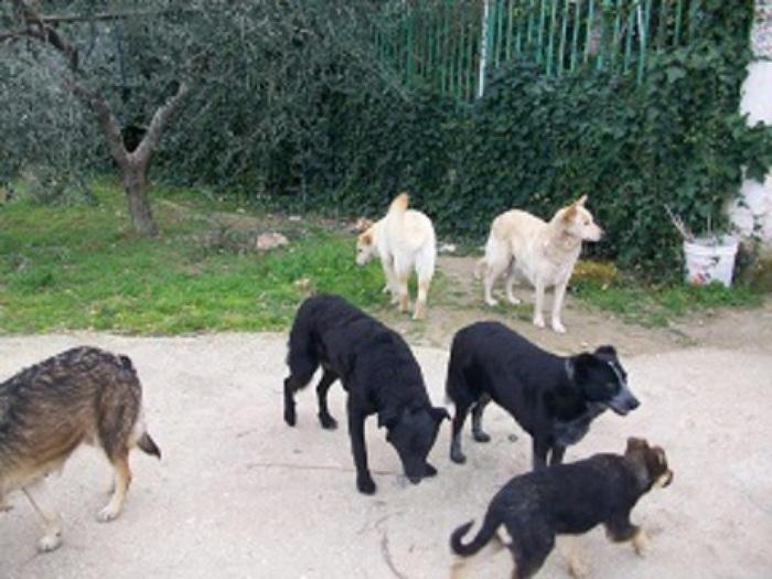 Avvelenati 3 cani randagi a Sciacca, altri scomparsi