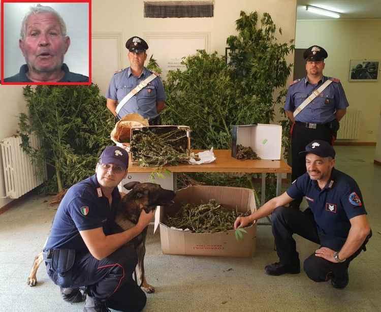 Scoperta una piantagione di marijuana a Partinico, arrestato 75enne