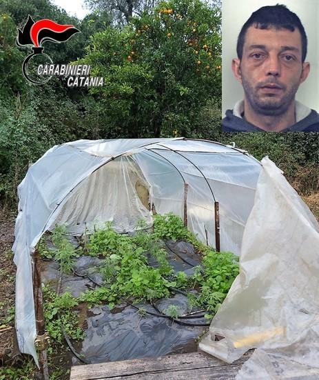 Preso con 33 piante di canapa: arrestato ad Acireale