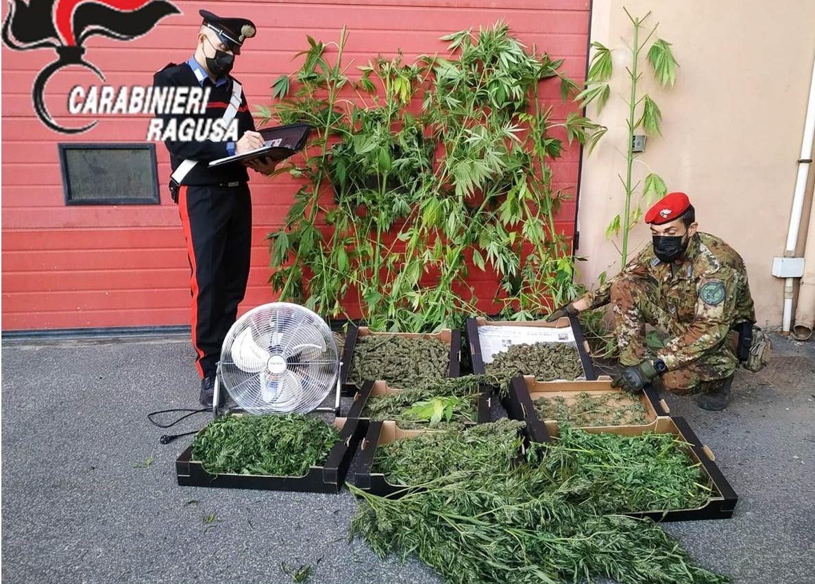 Vittoria, aveva 4 chili di marijuana: agricoltore arrestato dai carabinieri