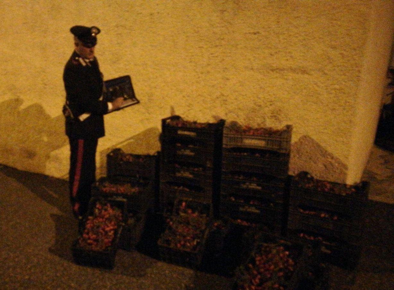 Ruba 300 chili di pomodori, un uomo arrestato a Cassibile