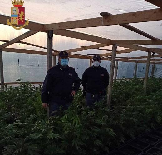 Comiso, sequestrata una serra di marijuana: arrestato un 54enne