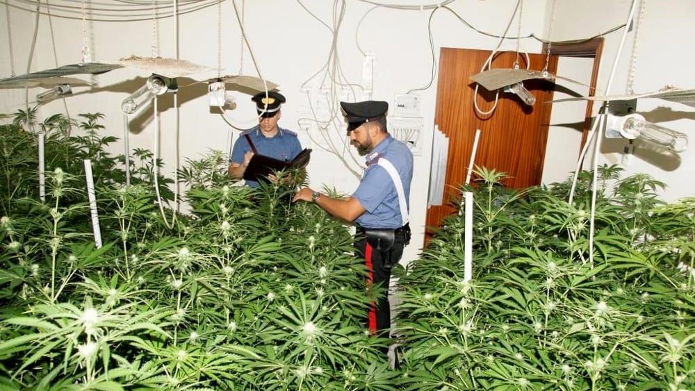 Trovata serra artigianale indoor di canapa indiana a Palermo, un arresto