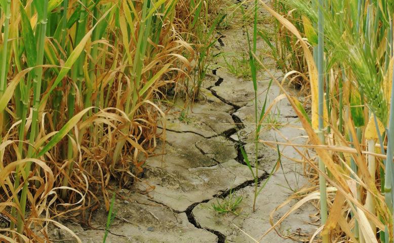 Agricoltura: in Sicilia un Tavolo regioni su siccità e innovazione