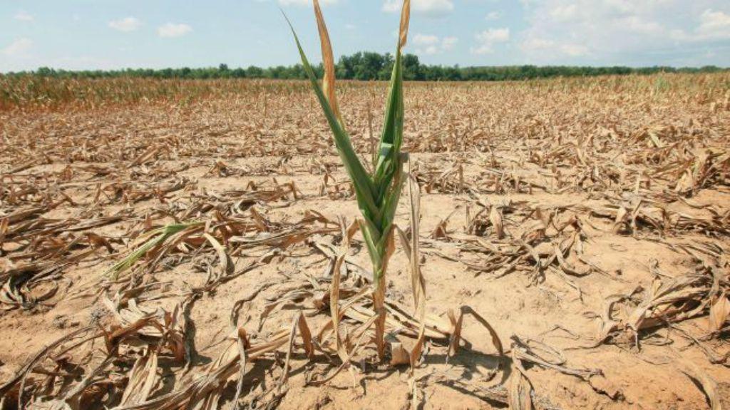 Siccità, in Sicilia danni all'agricoltura per 10 milioni di euro