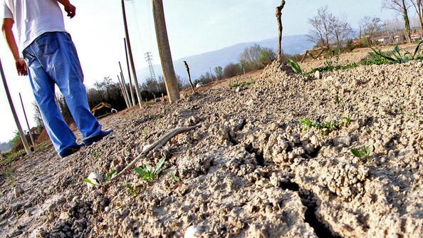 Siccità, nelle campagne danni per un miliardo di euro