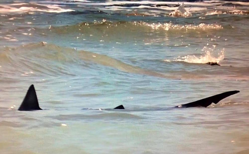 Due squali nella spiaggia della Tonnara: panico a Sciacca