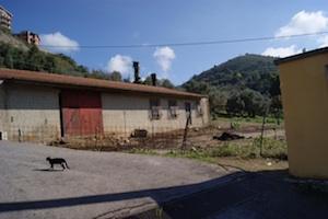 Maltrattamento di cavalli, denunciato in stato di libertà a Valguarnera