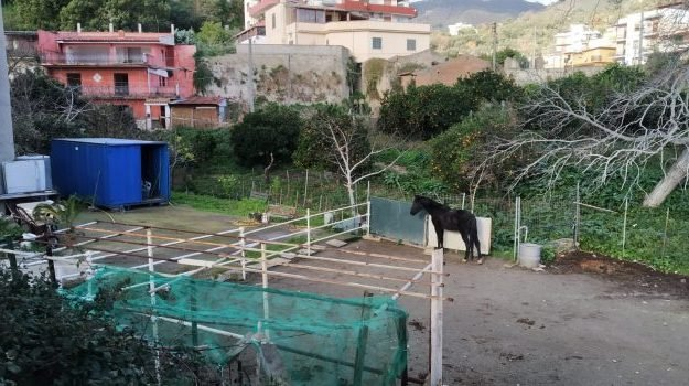 Stalla abusiva con un cavallo sequestrati a Messina