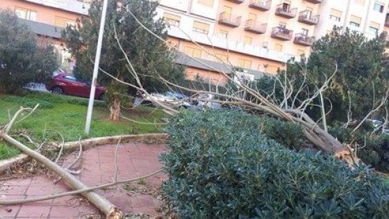 Ramo spezzato in piazza Strauss da 15 giorni a Palermo