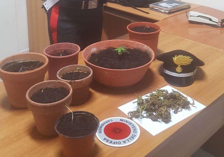 Siracusa, coltivava marijuana in un casolare: incensurato ai domiciliari