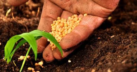 Sviluppo agricolo in Sicilia, impegnati 23 milioni di euro
