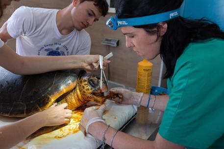 Chiude il centro di recupero tartarughe marine di Brancaleone