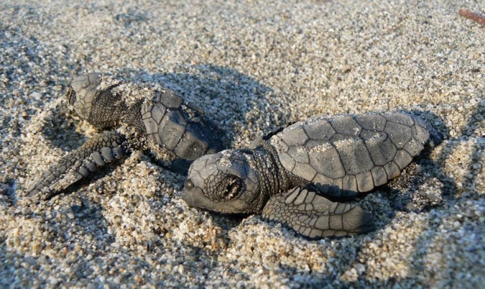 Ognina di Siracusa, ancora schiuse di tartaruga marina sulla spiaggia