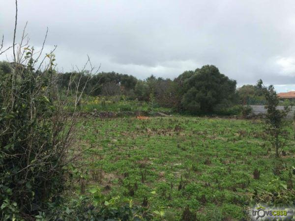 Riceveva erogazioni dall'Agea su false attestazioni: allevatore di Maniace denunciato