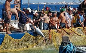 """Pesca, AnciSicilia: """"Preoccupati per la tonnara di Favignana"""""""