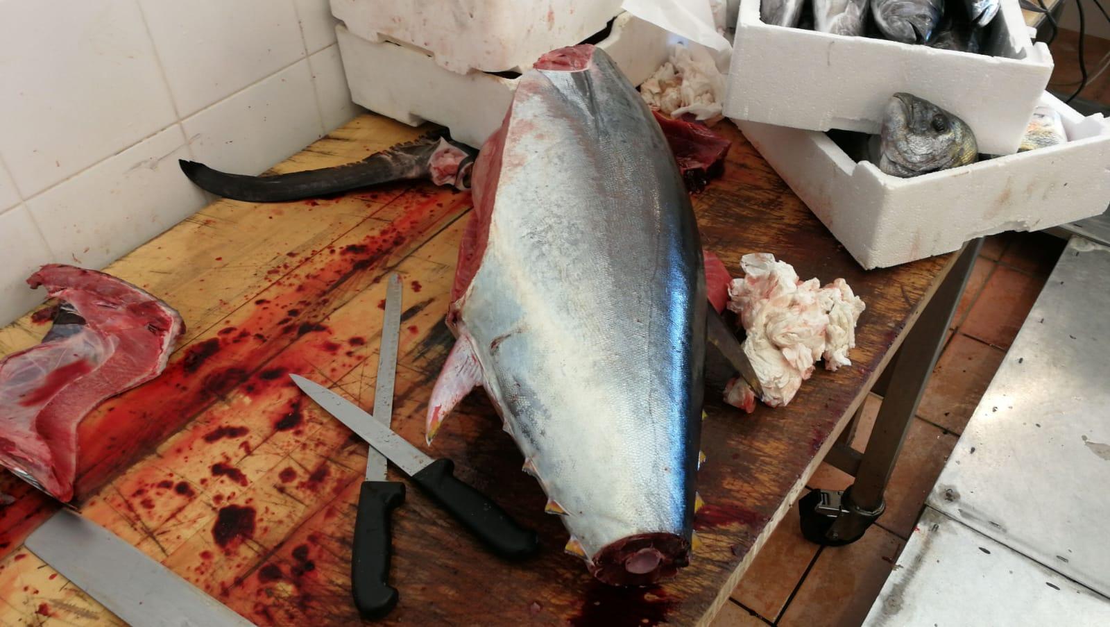 Blitz della Capitaneria in una pescheria di Avola: sequestro e sanzione