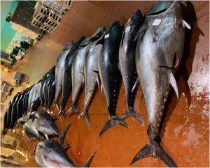 Sequestrate tre tonnellate di tonno a Riposto