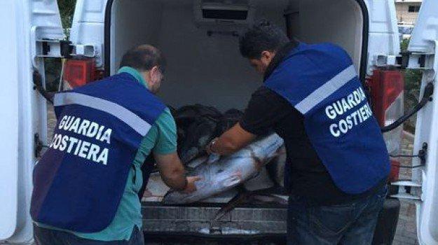 La Capitaneria sequestra a Palermo 2.650 chili di tonno