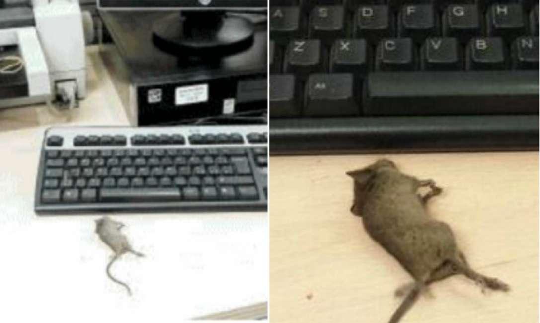 """""""È invaso dai topi"""": chiuso il centro per l'impiego di Vibo Valencia"""