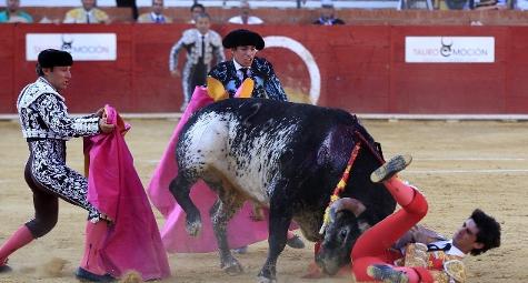Travolto nell'arena, torero muore in ospedale dopo essere stato incornato